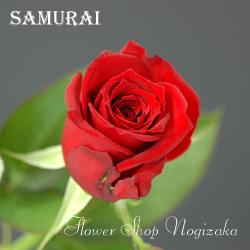 品種 : サムライ 、 生産者 : 神奈川県 鈴野バラ園