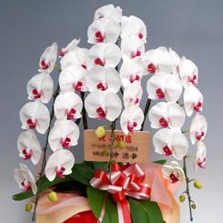 花コラム・・開店1ヶ月後に贈る 祝花