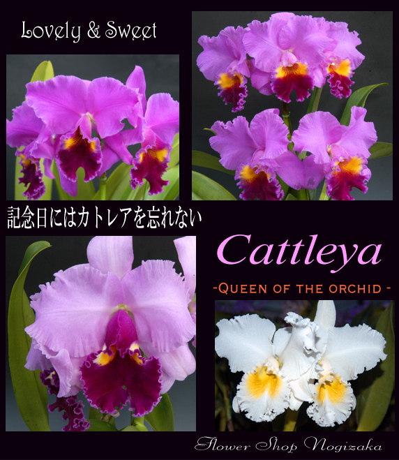 カトレアは「蘭の女王」と呼ばれる気品と美しさに溢れた花です。
