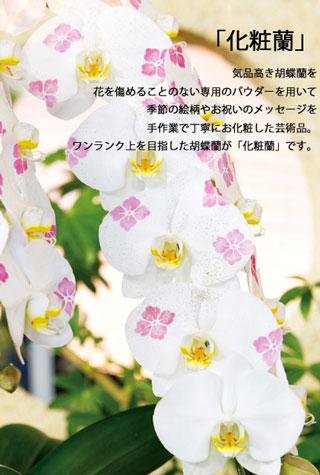 ワンランク上の化粧蘭