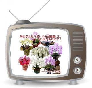 胡蝶蘭には自信があります