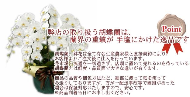 弊店の取り扱う胡蝶蘭は、蘭界の重鎮が手塩にかけた逸品です